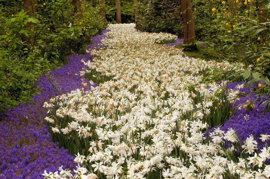 Netherlands_2005_0326-Edit_flower_path_2_profile_2-1