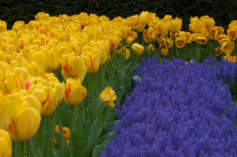 Netherlands_2005_0312-1