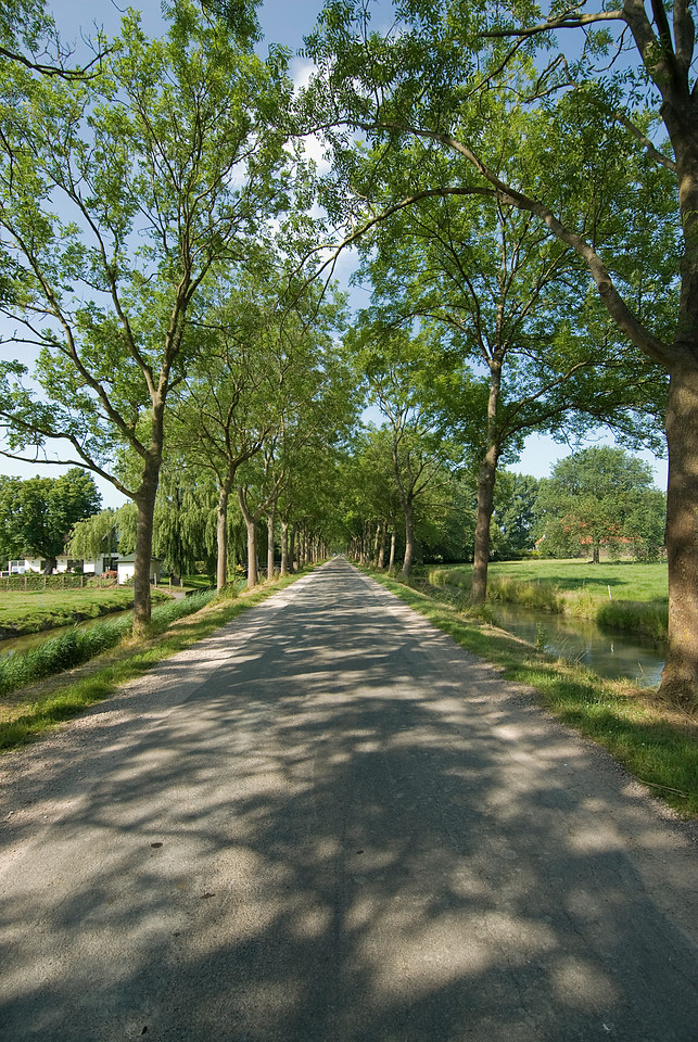 Tree lined road in Beemster Polder, Netherlands