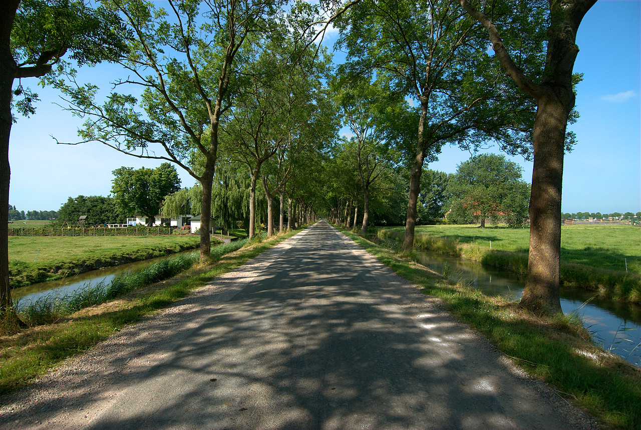 Beautiful tree-lined road in Beemster Polder, Netherlands