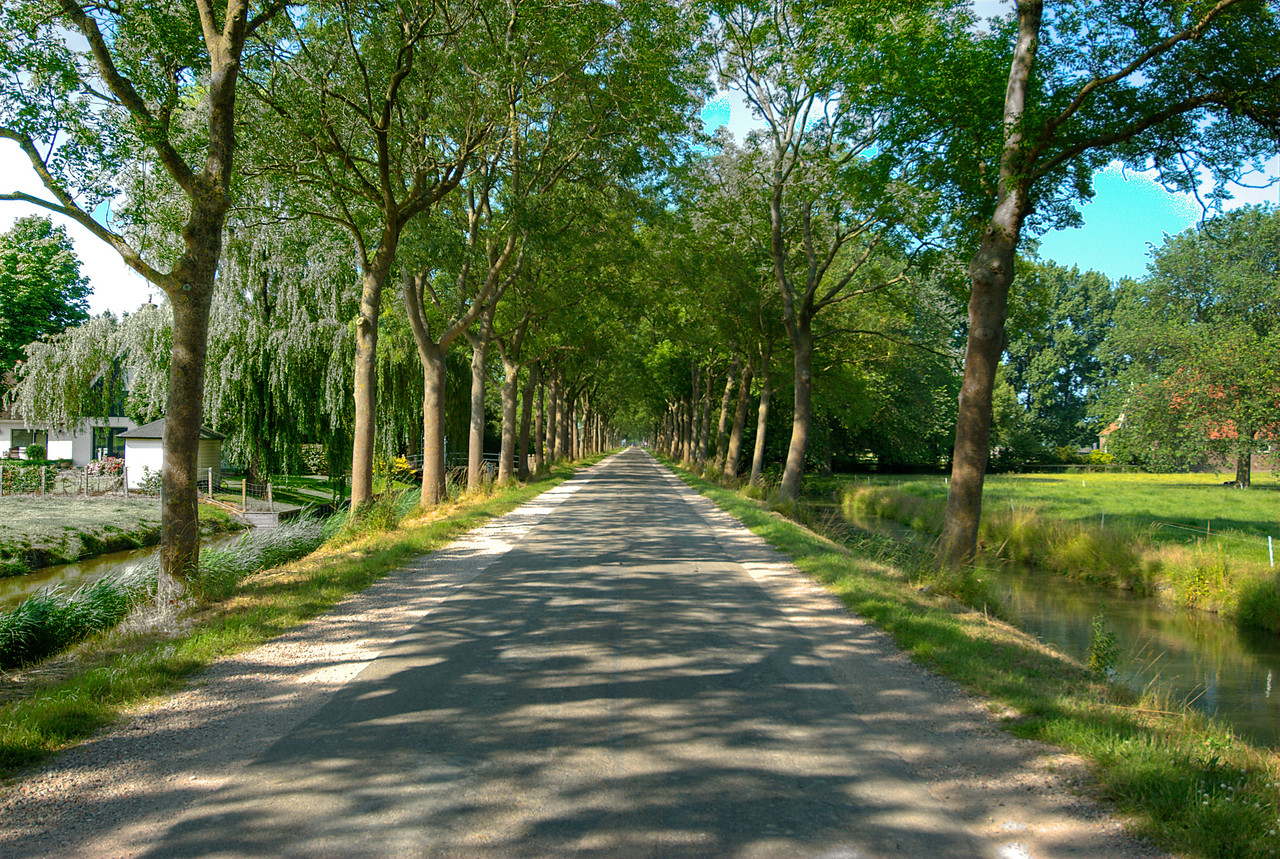 Tree-lined road in Beemster Polder, Netherlands