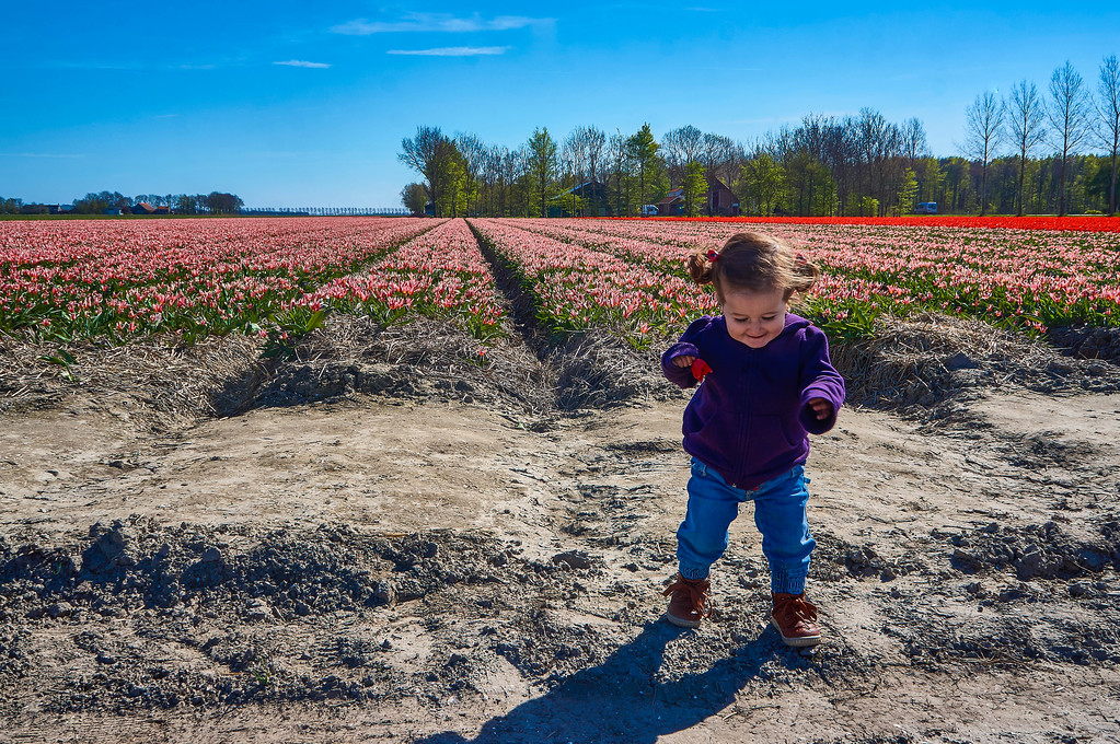 Picking flowers near Emmeloord in the Netherlands