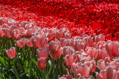 Fantastic shades of red!