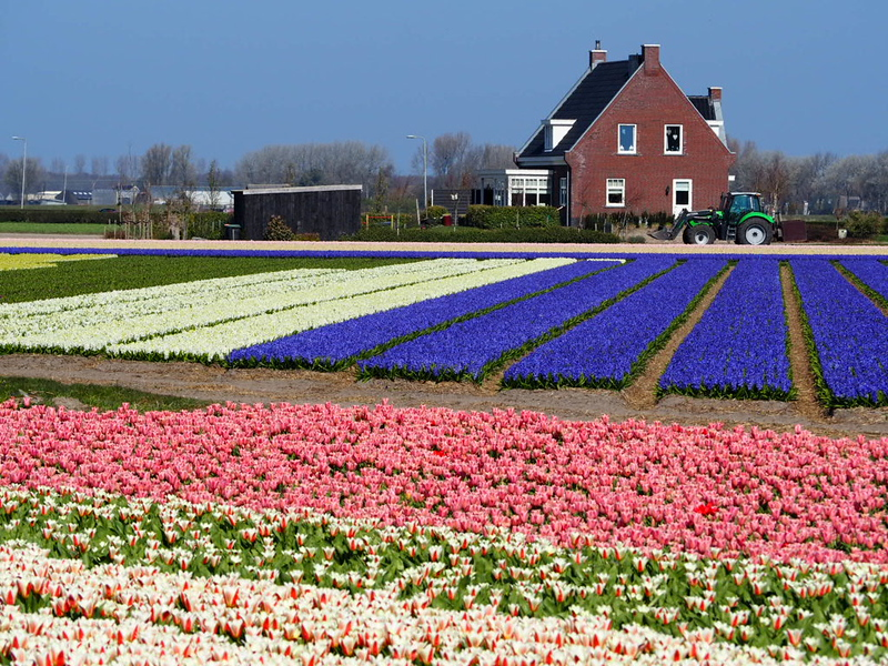 day trips from amsterdam - tulip fields in lisse