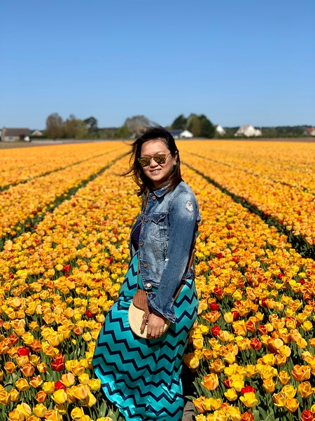 lisse tulip fields - great day trip from amsterdam