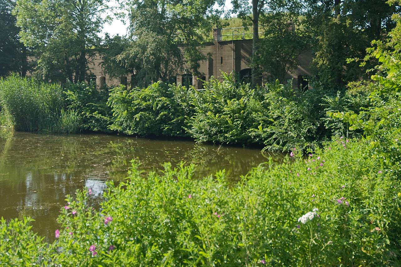 Bushy swamps in Netherlands