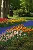 Keukenhof Gardens - Tulips 2