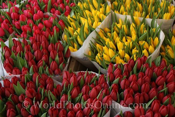 Middleburg - Tulips