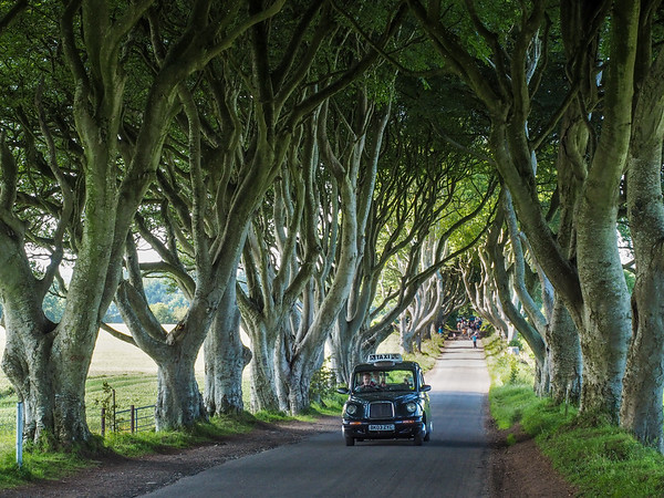 Black cab at the Dark Hedges in Northern Ireland