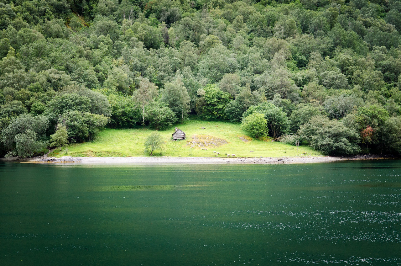 A small sheep meadow along the fjord.