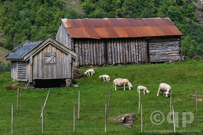 NARROWFJORD FJORD FARM WITH SHEEP