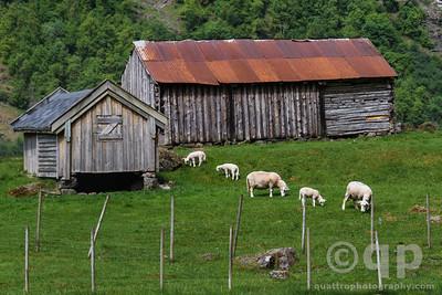 NARROWFJORD FJORD FARM WITH SHEEP