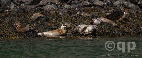 FJORD SEALS