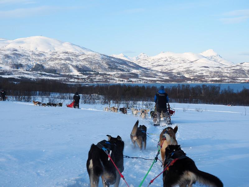 Dogsledding with Tromsø Villmarkssenter in Norway