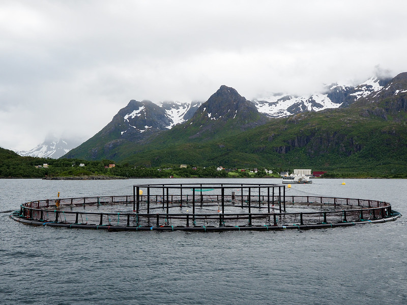 Salmon farming in Norway
