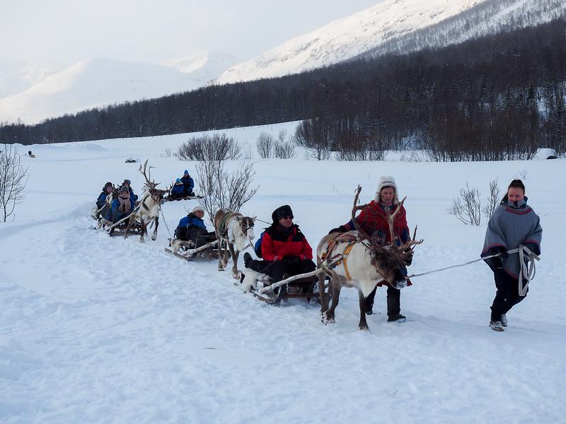 Reindeer sledding in Northern Norway