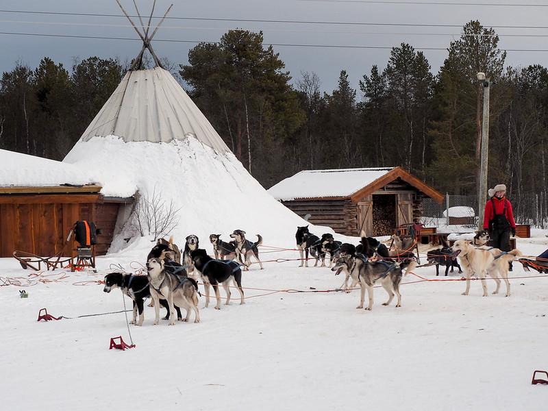 Holmen Husky Lodge in Alta, Norway