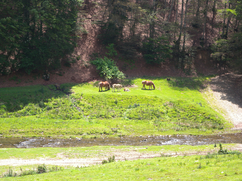 There are horses everywhere in the Basque country.