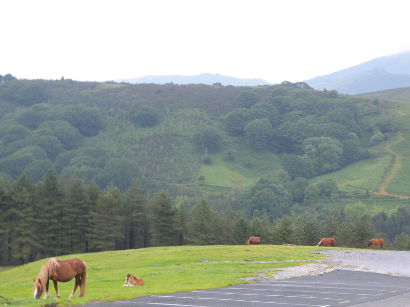 Basque country: lots of green grass, grazing animals, mixed forest and a myriad of small roads linking valleys.