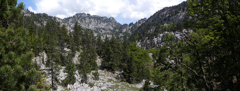 Pine forest in limestone country.