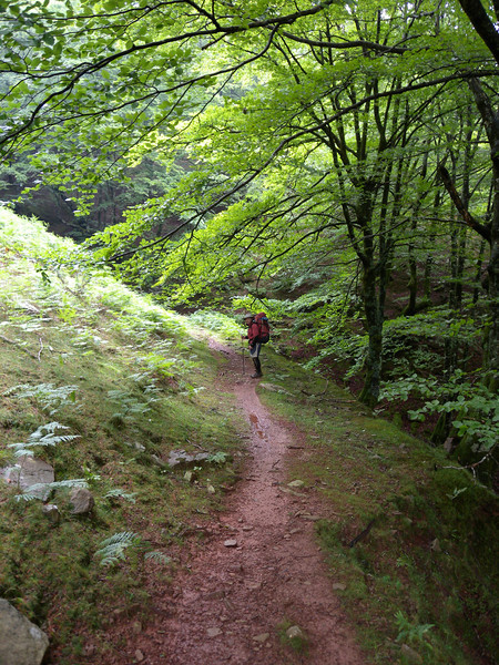This photo gives a feel for the beech forest and the nature of the paths in the Basque country.