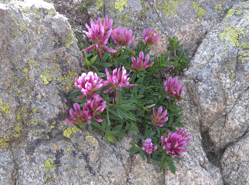 Flowers clinging to rock