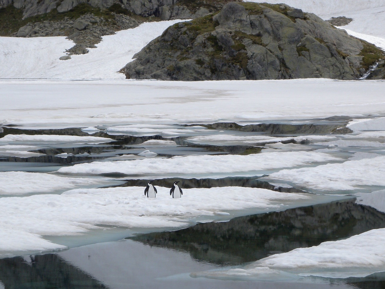 Penguins in Lake Arremoulit