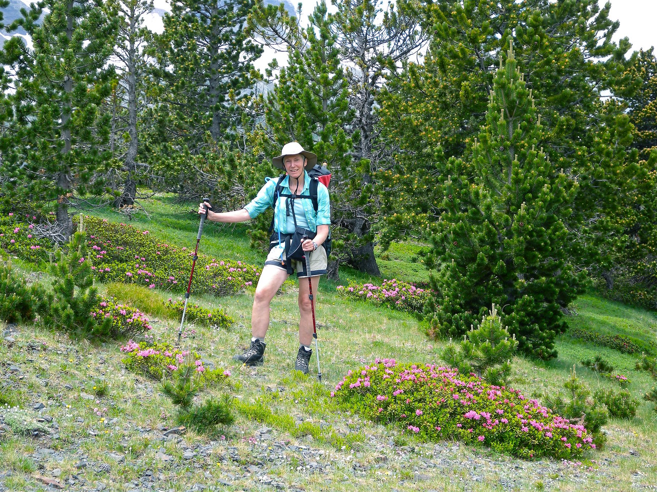 Di, Pines, Alpenrose