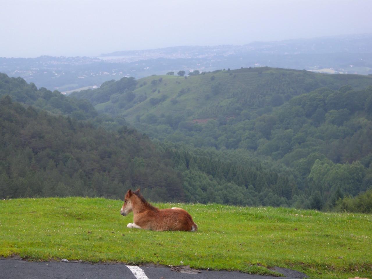 Foal @ Col d'Ibardin