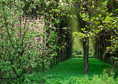 Fruit Trees, Loire Valley