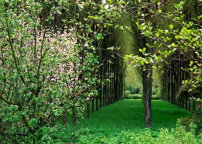Fruit Trees, Loire Valley