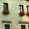 Krakow windows