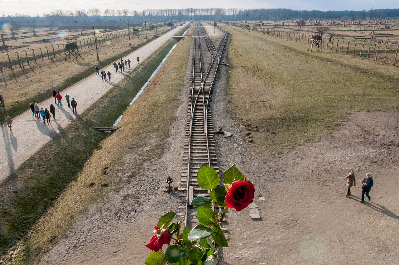 A stem of rose at the Auschwitz Birkenau site in Krakow, Poland