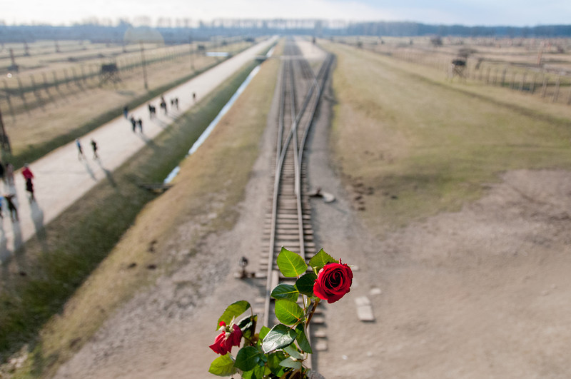 Rose at the Auschwitz Birkenau concentration camp in Krakow, Poland