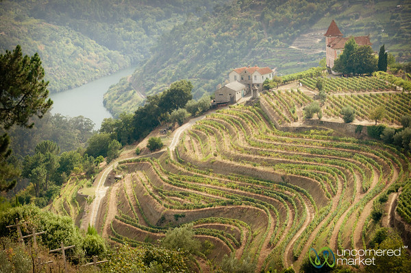 Douro Valley Vineyards and River - Portugal