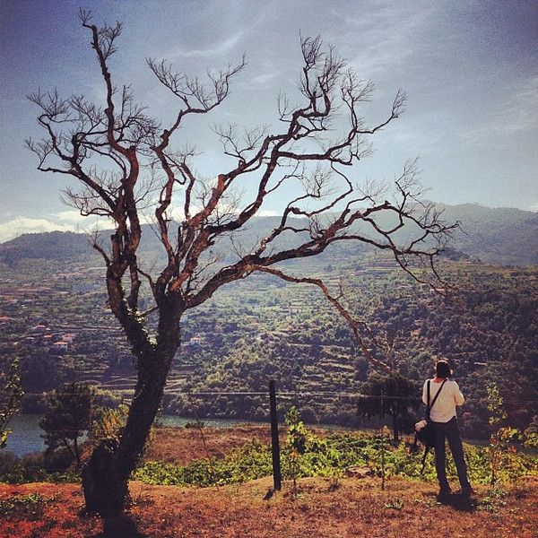 Photo session under a skeleton tree, Douro Valley, #Portugal #tbupor