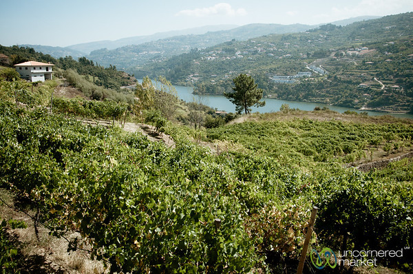 Douro Valley Vinyards - Portugal