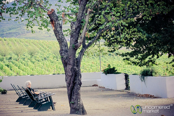 Relaxing in the Sun at Quinta de Pacheca Winery - Douro Valley, Portugal