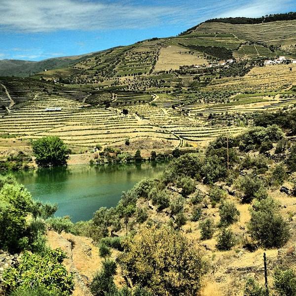 Douro Valley overlook from Quinta De Seixo, the source of Sandeman port #wine #tbupor