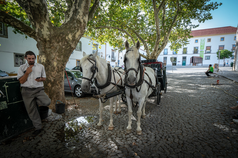 Horses and driver relaxing in the shade on a hot summer day in Evora.