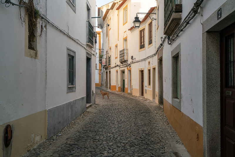 A lone dog on a street in Evora.