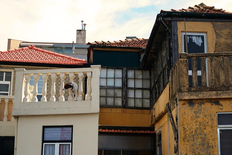 Doggo on guard. Porto. June 2019