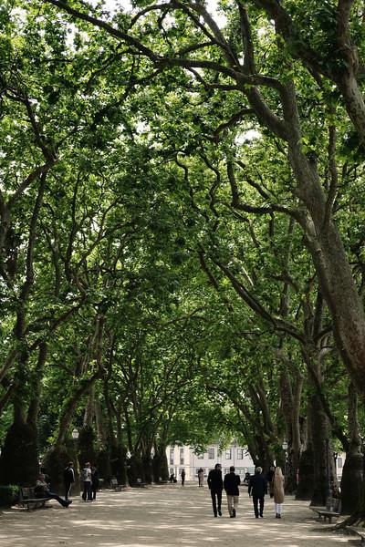 Cordoaria's Garden. Porto. June 2019