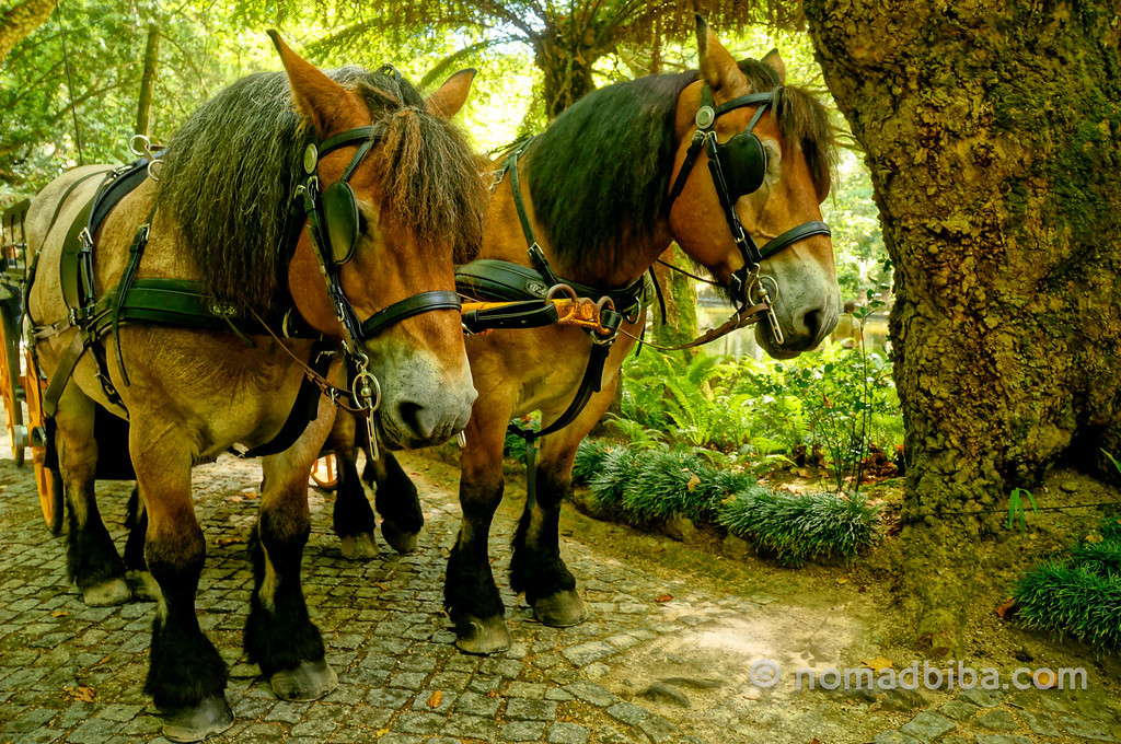 Horses working at the Pena Palace