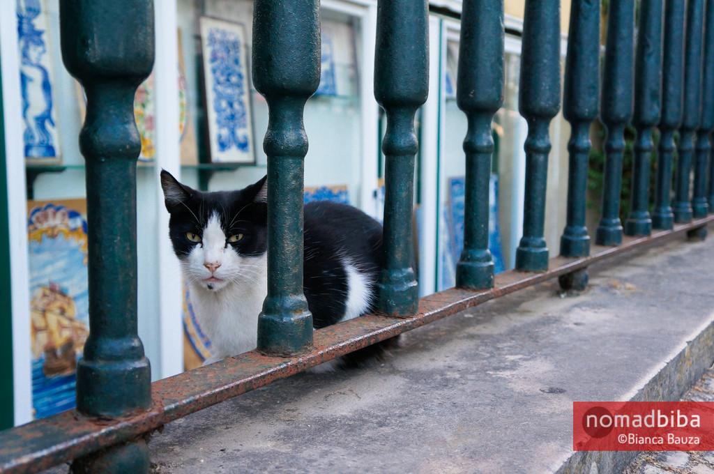 Cat in Sintra, Portugal