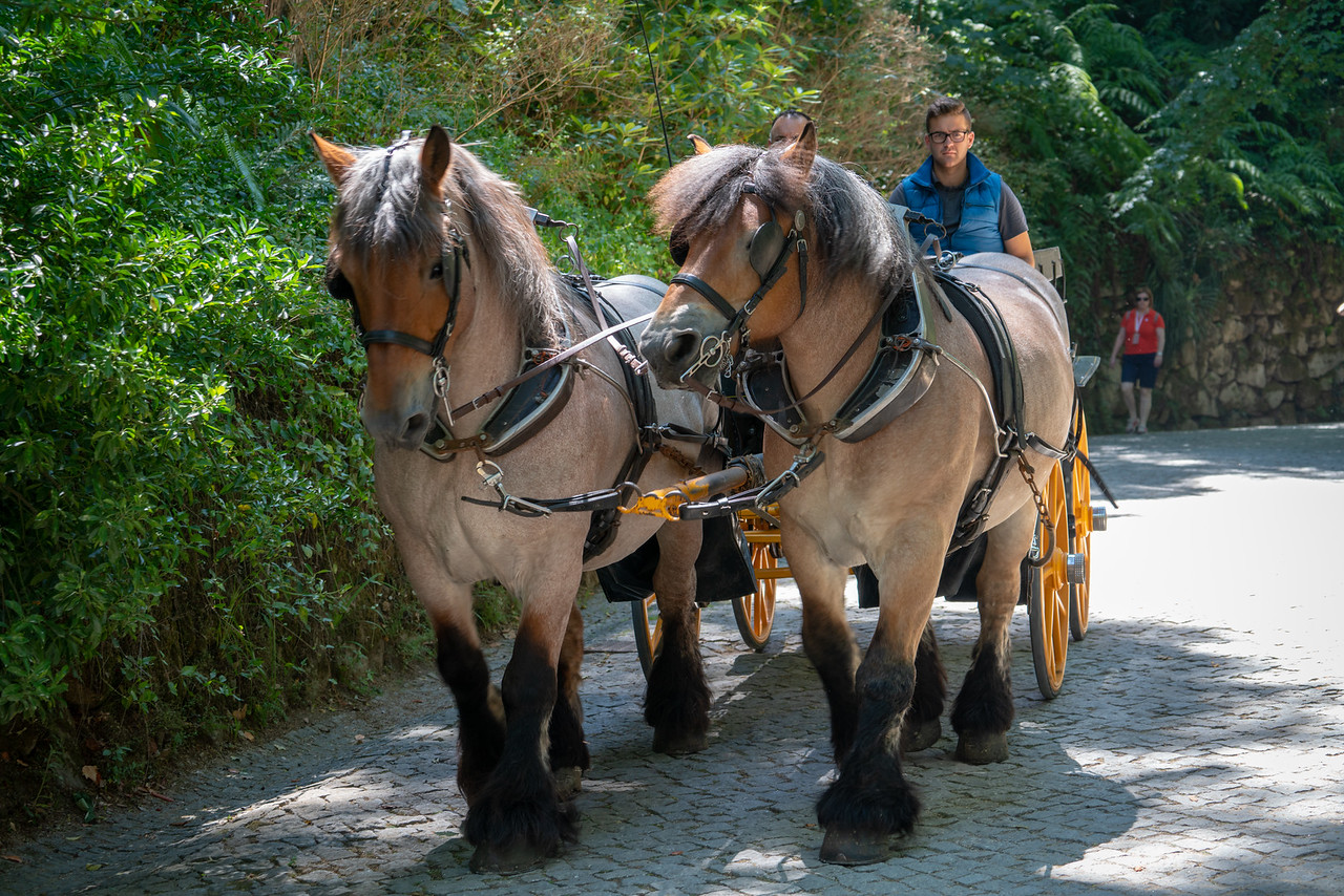 On my way from Pena Palace to the Moorish Castle I passed this wagon being pulled by draft horses.