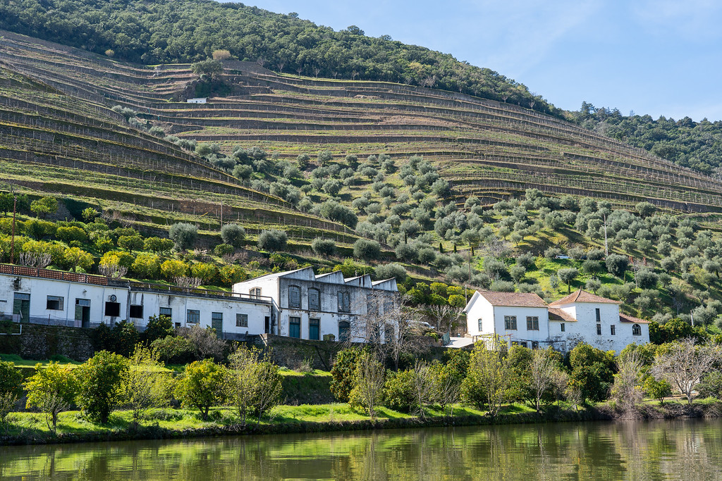 Views on a Douro River cruise