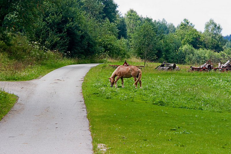 <center>Grazing   <br><br>Gross Pertholz, Austria   <br><br>Horses were grazing along the side of the lane.    </center>