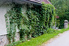<center>Ivy   <br><br>Gross Pertholz, Austria   <br><br>This house was covered in ivy. There's something about ivy covered walls that make me want to photograph them.    </center>