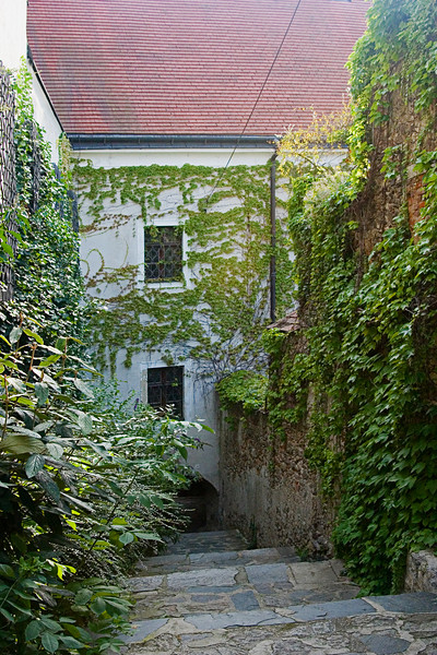 <center>More Ivy   <br><br>Durnstein, Austria   <br><br>More ivy covered walls caught my attention.    </center>